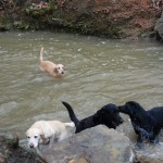 Playing in the Creek